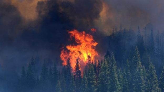 Los incendios en Arizona han superado el número del año pasado