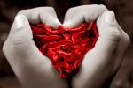 La nobleza del amor