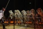 El Congreso mexicano prohíbe el uso de animales en los circos
