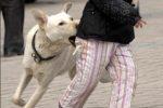 Las mordidas de perros y la responsabilidad civil